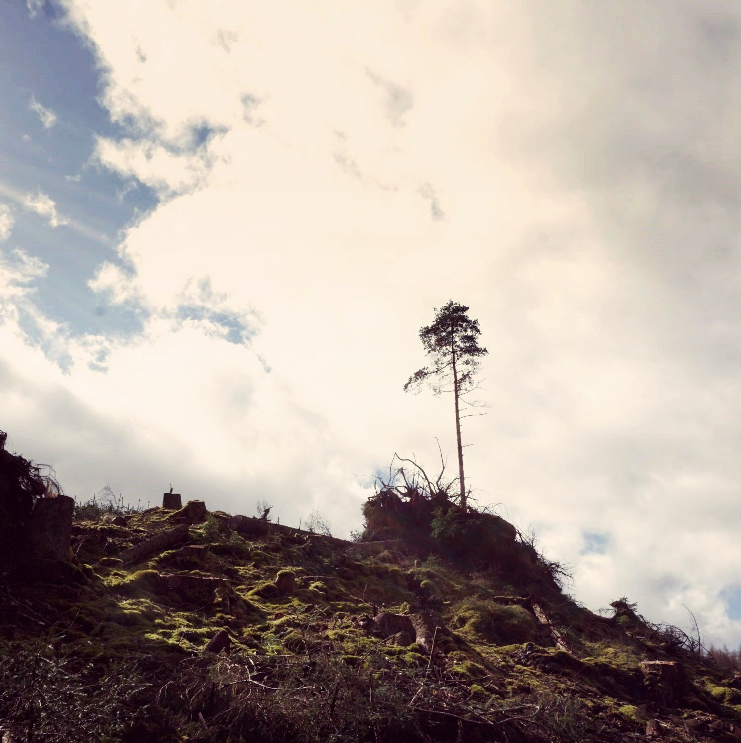 drzewa-1