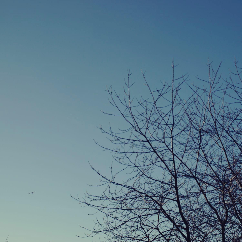 drzewo-4